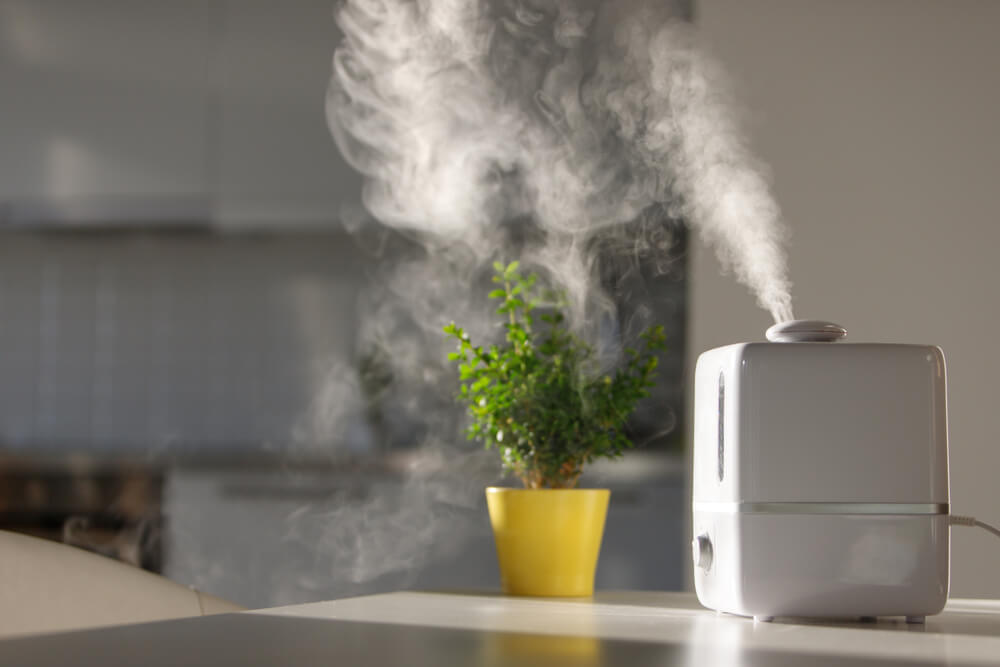 what to put in humidifier to prevent mold